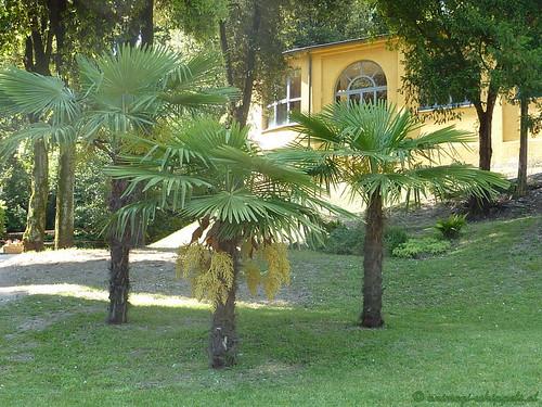 Garten P1010131