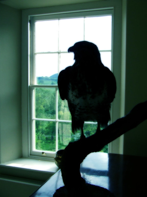 buzzard in the hall