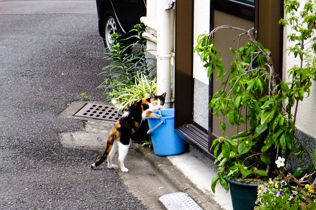 Today's Cat@2011-06-08