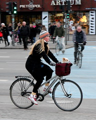 Classic Copenhagen [with pet]