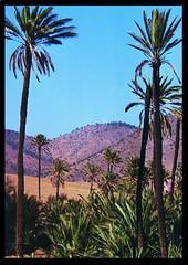 Marokko - Paradise-Vallye (roba66 (Thx for 20 Mill. views)) Tags: africa maroc marocco afrika marokko tal paradisevalley palmen nordafrika naturescreations flickrunitedaward naturesgreenpeace
