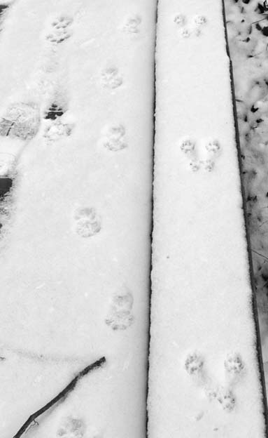 SquirrelTracks5