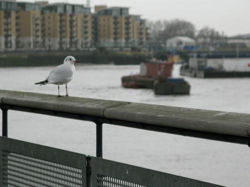 Bird overlooking the Thames