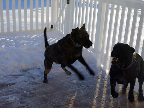 snowblower, dogs