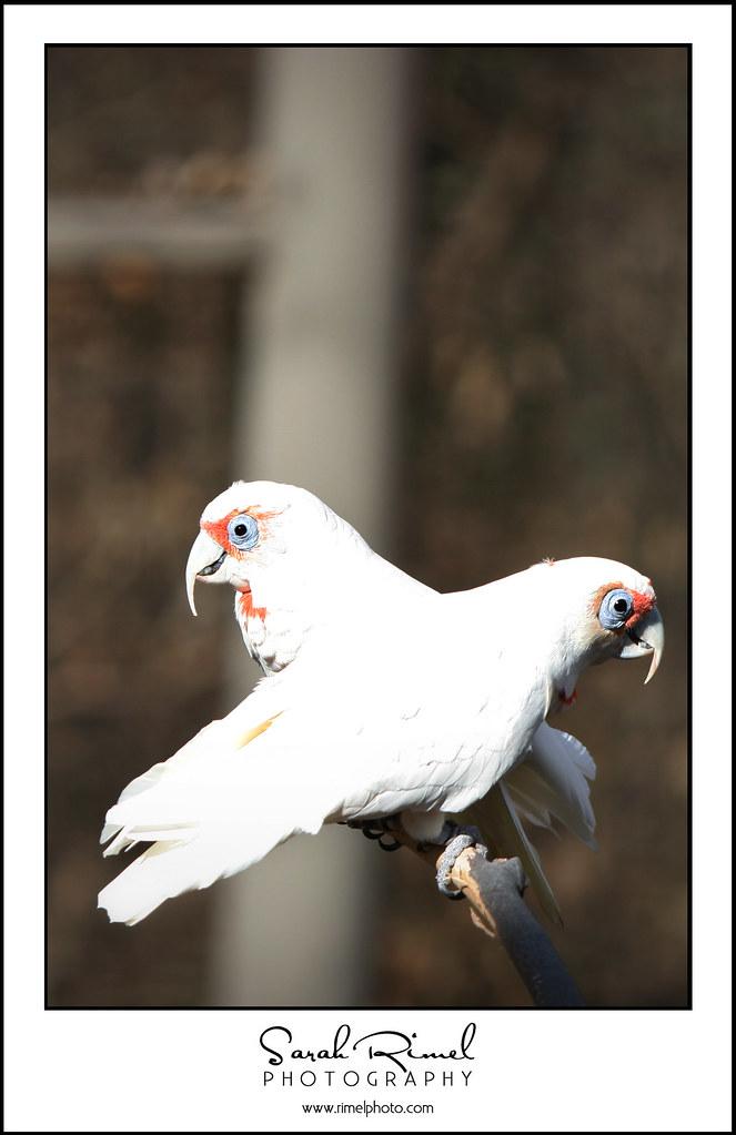 feb zoo 03