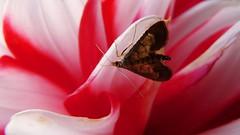 Moth in hiding