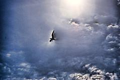 cielo con luce che attraversa le nuvole e delinea il contorno di un uccello che vola