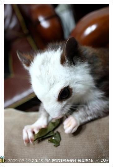 09年二三月小飛鼠Meiz生活照 (5)