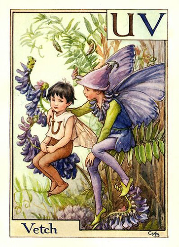 029-vetch_flower_fairy