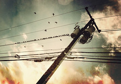 My Heart Skipped A Beat and Disaster Struck ({peace&love}) Tags: blue red sky texture birds clouds flying telephone pole wires electricity migration pinkparis1233