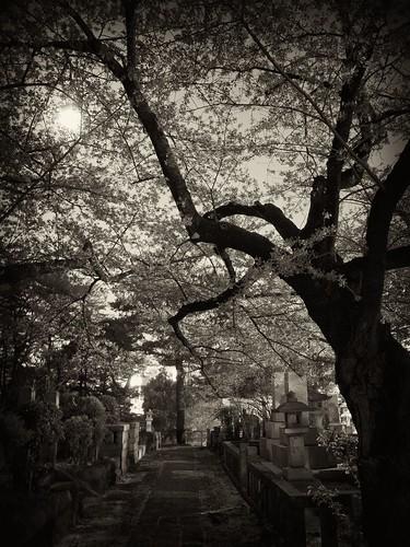 墓地の通り
