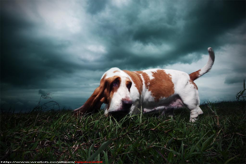 愛犬巴吉度(墾丁篇)
