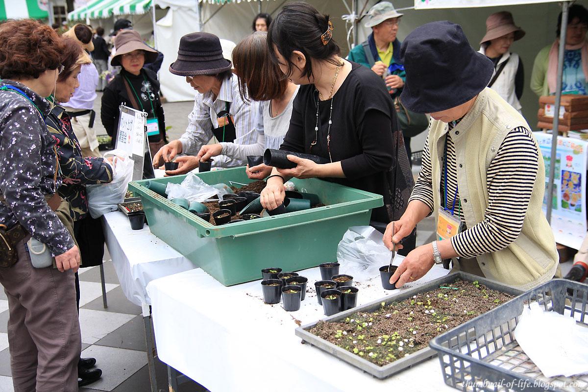 Flower Festival 3