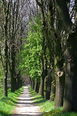 row of trees (green_lover (I wait for your COMMENTS!)) Tags: trees street alley hometown towns żyrardów poland nature green theunforgettablepictures platinumphoto explorewinnersoftheworld vanishingpoint