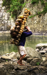 Burden Bearer (the-earth-colors) Tags: wood water canon river eos waterfall rocks coconut falls waterfalls coconuts firewood hdr carry carrying glendon cs4 exploit photomatix singleraw explorenomore macquinto fortydee