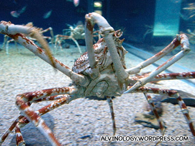 Close-up of the crab