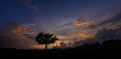 Big Sky: The Tree (MattGerlachPhotography) Tags: blue sunset panorama orange tree colors silhouette clouds one evening spring alone colours panoramic goodnight relaxation aftertherain photostitch thetree mattgerlachphotography betweenthestorm