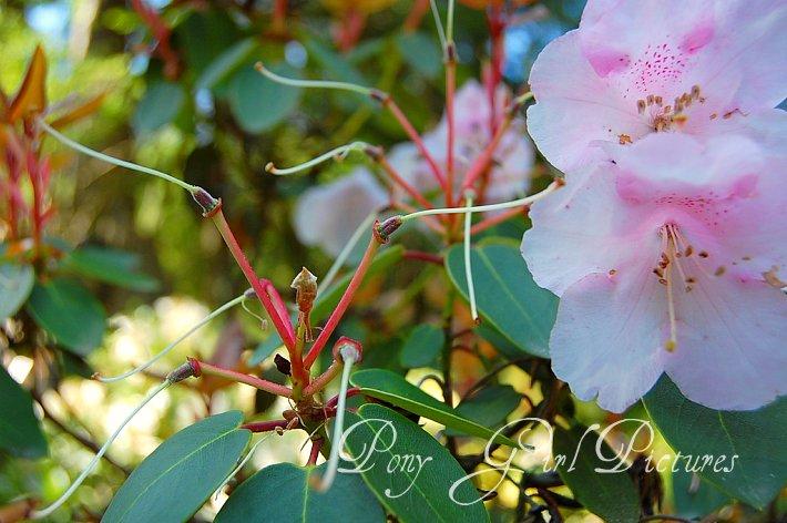 Fallen Blooms1