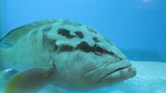 (Ali Mirghaderi) Tags: ali mirghaderi esfahan alimirghaderi imadmiral iran aquarium sand white whitesands shark fish underwater water sea      persia persian      pars iranian irani road   parsi