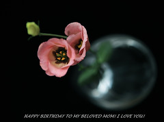 Chc mng sinh nht m yu qu ca con! (Tran_Thaohien) Tags: birthday flowers flower color cute love colors leaves loving mom cards happy leaf colorful you spirit smooth mother happiness mum card happybirthday excellent inspire tender happybirthdaycard hoa yu p thip tnhyu thaohien hoap nhhoa tranthaohien thiphoa
