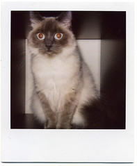 I saw a ghost (This Is A Wake Up Call) Tags: cat polaroid 600 molko slr680se