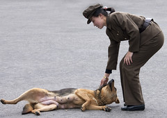 USA and North Korea! (Eric Lafforgue) Tags: pictures woman dog chien girl soldier photo war asia dof picture korea asie coree soldat northkorea nk pyongyang dprk coreadelnorte northkorean nordkorea 3471 lafforgue    coredunord coreadelnord  northcorea  insidenorthkorea  rpdc  coriadonorte  kimjongun northkoreaarmyphotos coreiadonorte