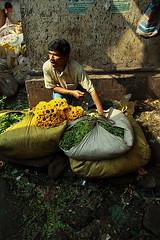 sunflowers | Kolkata (arnabchat) Tags: india man flower wet market sunflower selling kolkata bengal seller bazar calcutta bangla moist westbengal canon400d arnabchat mullickghat arnabchatterjee mullickghatflowermarket