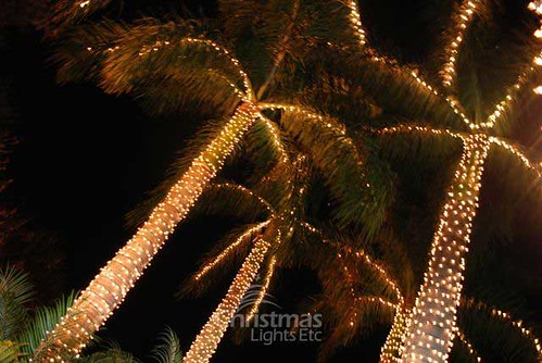 More Palm Trees Wrapped in Minilights