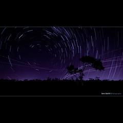 Stars and Spaceships... ([ Kane ]) Tags: longexposure light sky tree night photoshop dark star glow purple aircraft manly australia brisbane planes qld queensland stacking kane spaceships lightroom lota gledhill sillioutte kanegledhill wwwhumanhabitscomau kanegledhillphotography