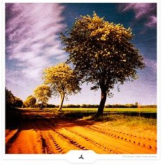 Cheering Backcountry (Gert van Duinen) Tags: trees field landscape digitalart backcountry landschaft cheering landschap unpavedroad dutchartist landschaftsaufnahme thesecretlifeoftrees natureselegantshots gertvanduinen explore25on20090623