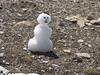 My tiny snowman...