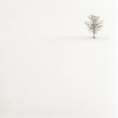 In White (Eye) Tags: longexposure hokkaido snowstorm fujifilm biei 30seconds acros100 nd400 nd8 autaut bronicaec nikkorpc200mmf4 takenonmarch142010