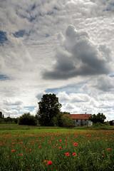 Urban spring view - Scena urbana primaverile (Robyn Hooz) Tags: italy house green ex field clouds canon casa italia nuvole sigma poppies campo noon aprile 1020 padova passeggiata mezzogiorno hsm 1000d tenminuteswalk adieciminutidicammino