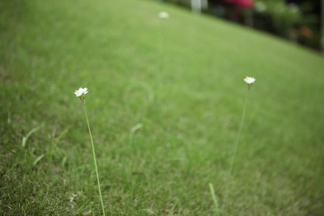 可憐な小花