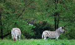 Manor House Wild Animal Park