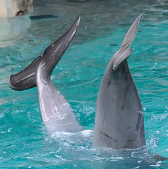 DSC_3239 (M.Demandt [Thanks for 240.000 views]) Tags: zoo nikon sp di 70300mm tamron vc mnster usd 456 70300 allwetter
