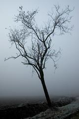 Frozen in the mist () Tags: winter mist tree gelo fog photography frozen photo foto photographer photos fotografia nebbia albero inverno freddo stefano fotografo trucco ghiacciato zush stefanotrucco