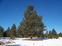 Wing Mountain in Flagstaff, AZ