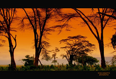 Mal d'Africa - Longing of Africa (bruno.campestrin) Tags: africa trees panorama plants nature alberi landscape tanzania view natura vista ngorongorocrater veduta soe unescoworldheritage vulcano ohhh volcan fiatlux vegetazione blueribbonwinner zarafa passionphotography abigfave worldbest anawesomeshot colorphotoaward ysplix arusharegion brilliant~eye~jewel colourartaward acaciaafricana africanacacia riservanaturalengorongoro ngorongoroconsevationarea crateredingorongoro pianuraserengeti patrimonioumanitunesco overtheshot goldenheartaward dragondaggerawards artofimages cffaa flickrclassique bestcaptureaoi superstarthebest