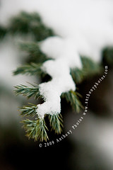 The world ceases to turn for this? (scifitographer) Tags: winter snow tree canon delaware 2009 canon2470mml hbw 40d bethanthony retroreflectography