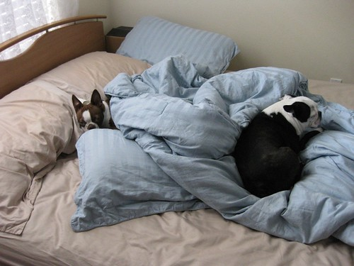 It was raining so they couldn't get out of bed