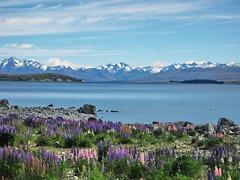 Lake Tekapo (Julia-Schmidt) Tags: lake neuseeland tekapo