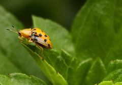 On The Edge Of Dreaming (tropicaLiving - Jessy Eykendorp) Tags: macro green bug indonesia ef70300mmf4056isusm canoneos50d tropicaliving vosplusbellesphotos jessyce tropicalivingtropicalliving ontheedgeofdreaming