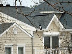 NJ: Belted Kingfisher (donna lynn) Tags: newjersey nj 2009 beltedkingfisher wrackpond