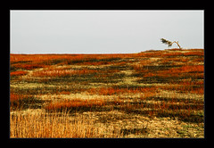 Autumn on Big Meadows, Shenandoah National Park (Artem Goncharuk) Tags: autumn red orange usa color tree fall colors yellow pine automne landscape rouge virginia nationalpark meadow meadows simplicity layers lonely shenandoah simple paysage minimalistic