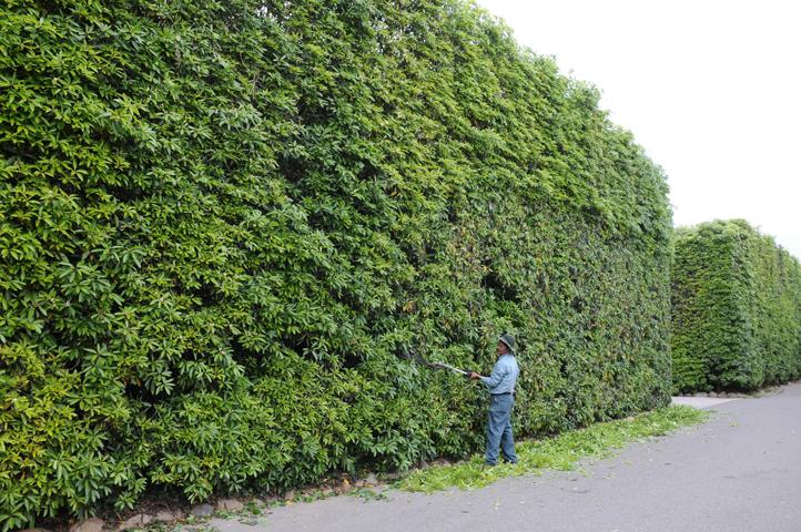 montecito gardener_5021 web