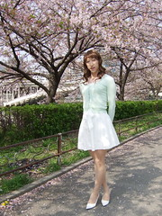 day109-209 cherry blossoms (Yumiko Misaki) Tags: white green cherry blossoms knit skirt osaka lime day109