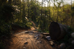 the buttermilk (Ansel Olson) Tags: park trees green forest landscape virginia woods rocks running run brush richmond dirt va xc mountainbiking jamesriver singletrack tiltshift richmondcity buttermilktrail sawnlog irunhere