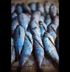 out of water - Amazonas ( Tatiana Cardeal) Tags: travel blue brazil food fish brasil digital amazon raw market fresh feira peixe 2009 amazonas brsil amazonia amazonie sogabrieldacachoeira