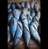 out of water - Amazonas (© Tatiana Cardeal) Tags: travel blue brazil food fish brasil digital amazon raw market fresh feira peixe 2009 amazonas brésil amazonia amazonie sãogabrieldacachoeira 亚马逊 아마존 亞馬遜 амазония αμαζονία アマゾニア أمازونيا
